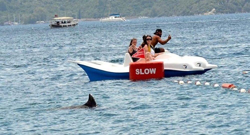 Delfin-çimərlik