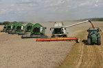 Уборка пшеницы на полях сельхозпредприятия