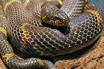 Выставка змей в Калининграде