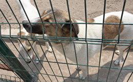 Приют для бездомных животных