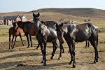 Лошади в фермерском хозяйстве