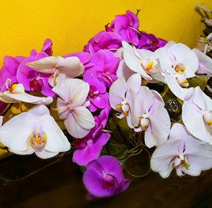 Орхидеи - самые красивые цветы