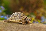 Злая черепаха. Архивное фото