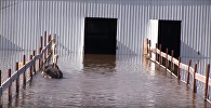 На Урале от наводнения спасают страусов