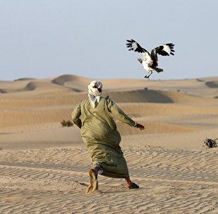 Арабский охотник. Архивное фото