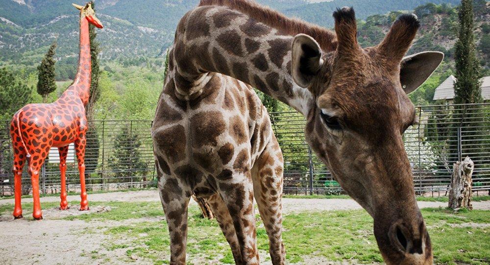 Открытие зоопарка Сказка в Крыму