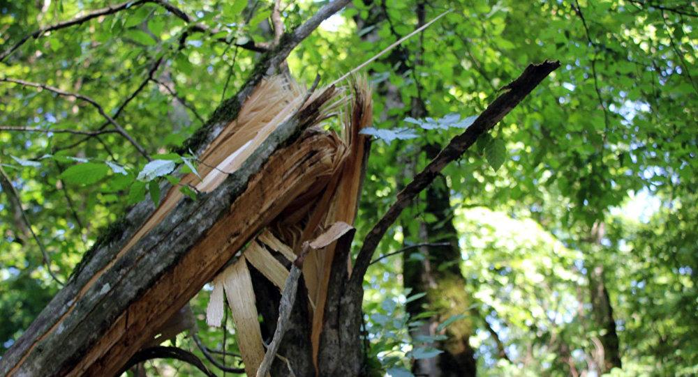 Поврежденные деревья в лесу, архивное фото