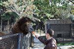 Вольер с верблюдом в Бакинском зоопарке