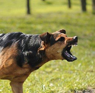 Бешеная собака. Архивное фото