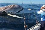 Avstraliyalı balıqçı Mark Vatkins okeanda səyahət edərkən gözünə nəhəng ölçülü bir cisim görünüb