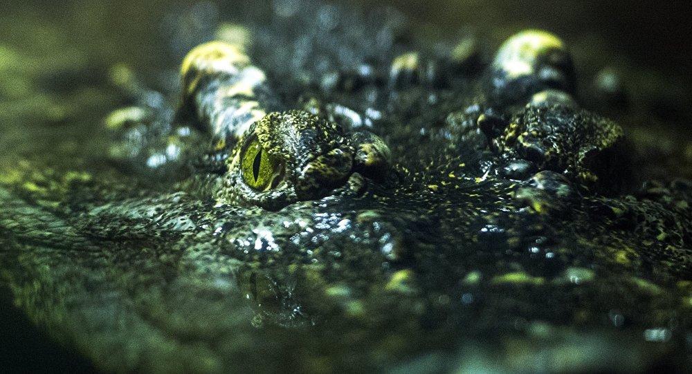 ВСША наженщину напал аллигатор иоткусил ейруку
