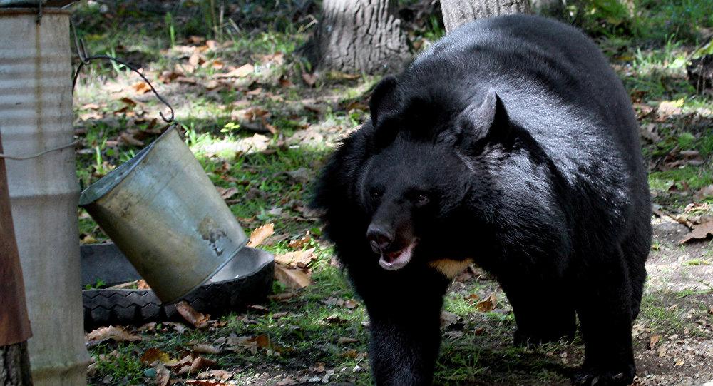 63-летний японский каратист впроцессе рыбалки обратил вбегство медведя