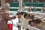 Фермерское хозяйство Северный олень в Московской области