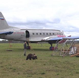 На аэродроме под Тверью живет медвежонок Мансур, дружащий с собакой