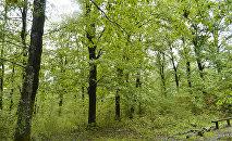 Деревья в Гирканском национальном парке