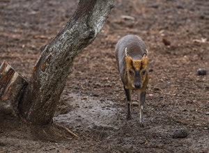 Антилопа, обитающая в зоопарке
