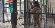 Бакинский зоологический парк, фото из архива