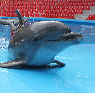 Delfinlər, arxiv şəkli