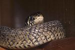 Змея, фото из архива