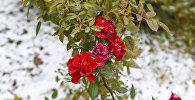 Ранний снег, архивное фото