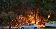Природные пожары в Израиле