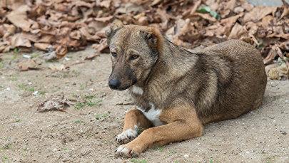 Собака, фото из архива