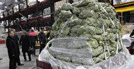 В Азербайджане началась посадка саженцев тута, привезенных из Китайской Народной Республики