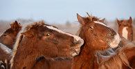Atlar, arxiv şəkli