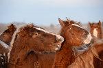 Табун лошадей, фото из архива
