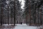 Парк Сосновка в Санкт-Петербурге, фото из архива
