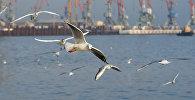 Чайки на Бакинском бульваре