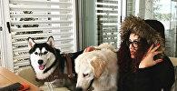 Собаки, архивное фото