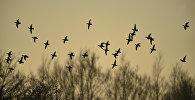 Перелетные птицы, фото из архива