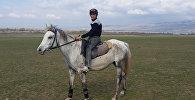 Dilbaz atları