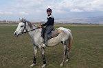 Лошадь породы дильбаз