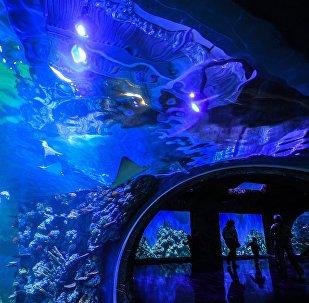 Крокус Сити Океанариум в Москве, фото из архива