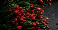 Тюльпаны, фото из архива