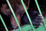 Медведь в вольере, фото из архива