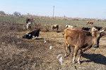Yevlax rayonu Malbinəsi kəndi