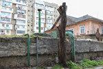 Yasamal rayonu Əhməd Cəmil küçəsindəki binaların həyətində kəsilmiş ağaclar
