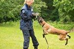 Тренировка полицейской собаки