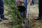 Посадка дерева, фото из архива