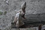 В Азербайджане найдена мумия невиданного зверя