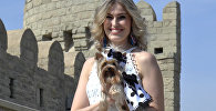 Шоу модных собачек в старом Баку