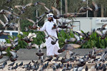A man looks at pigeons at Souq Waqif market in Doha, Qatar, June 6, 2017.