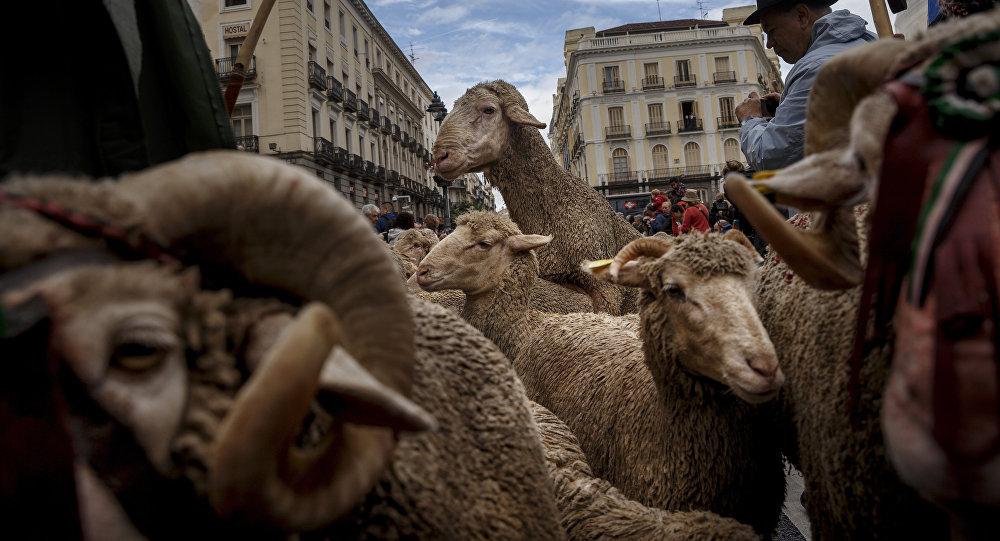 Минтруда закупает коров, овец, кур и пчелиные ульи для безработных