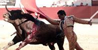 İspaniyalı matador İvan Fandino, arxiv şəkli