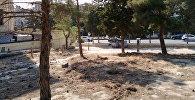 В Баку выявлен факт незаконной массовой вырубки деревьев, фото из архива