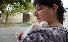 Кошкин дом или мама-кошек из Мингячевира