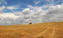 Засохшая трава на пастбище, фото из архива